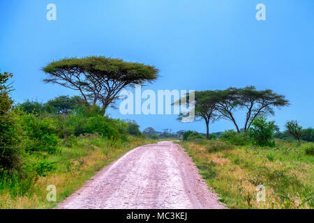 Road in African scenic forest - Stock Photo