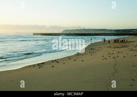 People and pigeons busy with early morning beach activities in Durban, South Africa - Stock Photo
