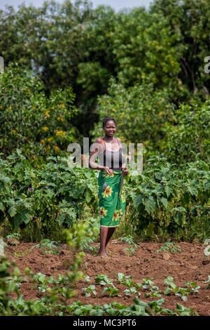 CABINDA/ANGOLA - 09 JUN 2010 - Rural female farmer working in the field. - Stock Photo