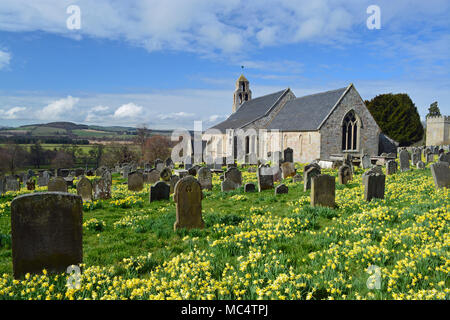 Ford Church with Daffodils, Northumberland - Stock Photo