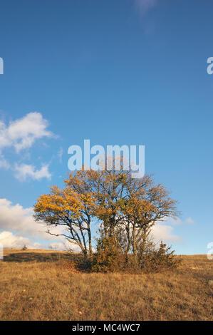 autumn tree. Composition of nature - Stock Photo