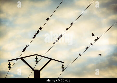 Birds on a telephone pole wire, Puy de Dome, Auvergne, France, Europe - Stock Photo