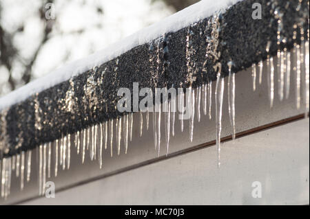 Row of icicles on flat felt roof building without gutter caused from freak heavy snow storm and warm sub freezing conditions - Stock Photo