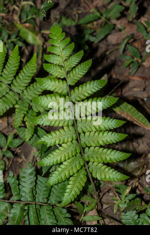Leaf of wild fern on the forest floor - Stock Photo