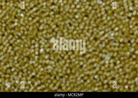 Emerald brown shiny defocused lights. - Stock Photo