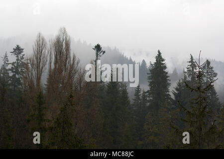 Forest tree tops in front of mountains hills covered with mysterious haze - Stock Photo