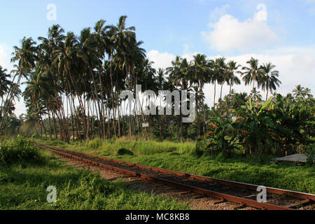 Coconut palm trees next to a railroad on the west coast of Sri Lanka, near Colombo - Stock Photo
