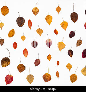 pattern from various fallen autumn leaves on white background - Stock Photo