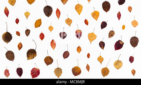 ornament from various fallen autumn leaves on white background - Stock Photo