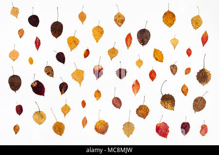 collage from various fallen autumn leaves on white background - Stock Photo