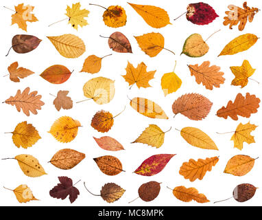 collage from various dried autumn fallen leaves isolated on white background - Stock Photo