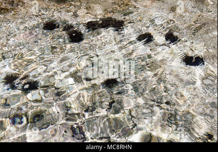 Cristal clear turquoise water and the sea urchins on the bottom, coast of Crete, Greece. wave pattern, wind ripples the sea surface. Sun reflections. - Stock Photo