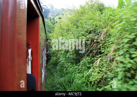 Taking a scenic train ride from Ella to Kandy, passing some tropical vegetation - Stock Photo