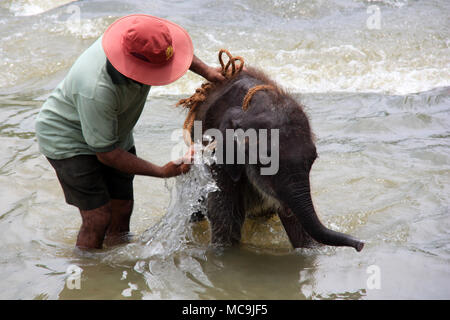 Cute Baby Elephant taking a bath and being washed by the keeper at the Pinnawala Elephant Orphanage in Sri Lanka - Stock Photo