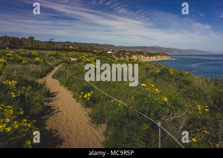 Beautiful yellow wildflowers blooming and covering Point Dume in springtime with coastline view of Dume Cove, Malibu, California - Stock Photo