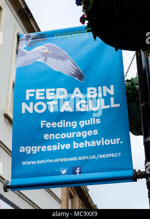 Sign in central Ayr asking public not to feed seagulls because of aggressive behaviour. UK - Stock Photo