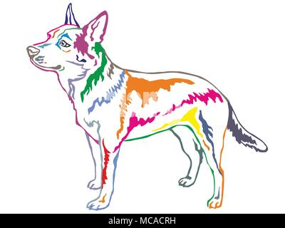 Colorful contour decorative portrait of standing in profile Australian Cattle Dog, vector isolated illustration on white background - Stock Photo