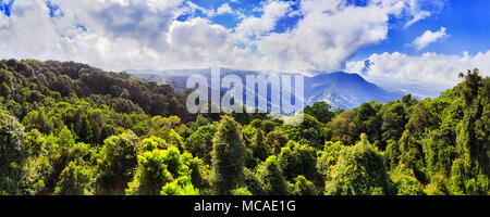 Evergreen canopy of temperate rainforest in Dorrigo national park from the main lookout near visitor centre towards scenic mountains and jungle covere - Stock Photo