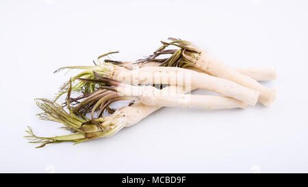 Roots of fresh peeled horseradish on white background, healthy foods - Stock Photo