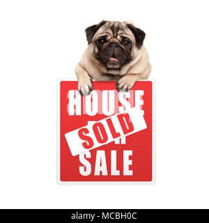 cute smiling pug puppy dog hanging with paws on red house sold sign, isolated on white background - Stock Photo