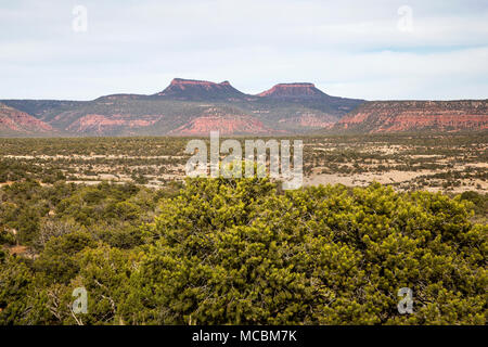 Bears Ears Buttes in the Bears Ears National Monument in southern Utah, United States - Stock Photo