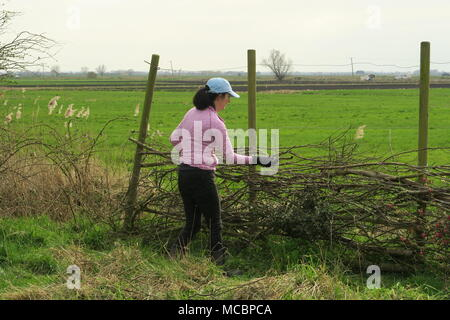 Fenland Fence Building - Stock Photo