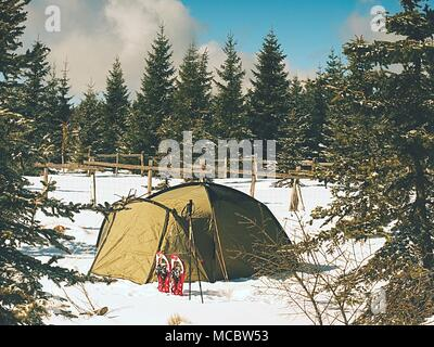 Camping during winter hiking in mountains. Green touristic tent under spruces. - Stock Photo