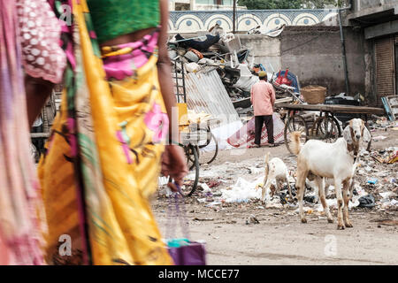 Goats eating plastic trash in a poor area of an Indian city - Stock Photo