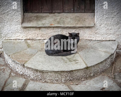 Alone black cat outside the door. Cute cats - Stock Photo