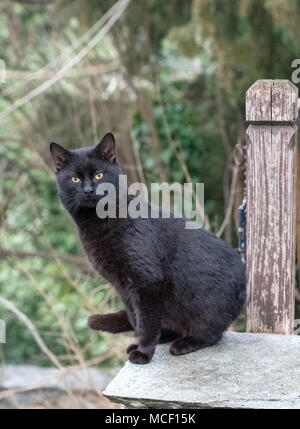 Black cat standing and looking. Green blurred background - Stock Photo