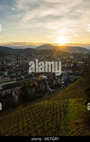 Germany, City Freiburg im Breisgau behind green vineyard in warm sunset light - Stock Photo