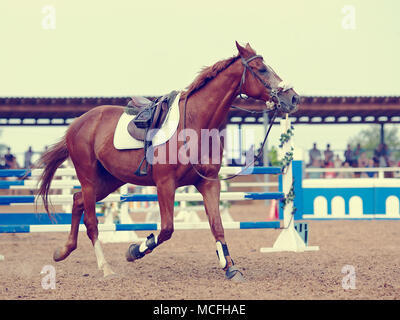 Sports horse in the field for competitions. - Stock Photo