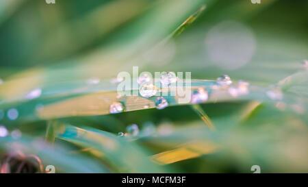 Water drops on green grass (macro image) - Stock Photo