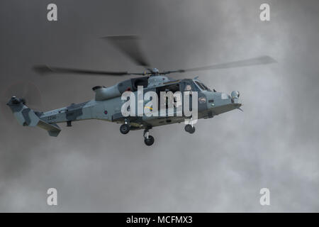 With 847 NAS training in the US the Wildcat A H mk 1 taking part in the role demonstration came from 652 squadron Army AIr Corps which carries ut the  - Stock Photo