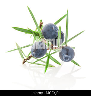 Juniper twig with berries isolated on white background - Stock Photo