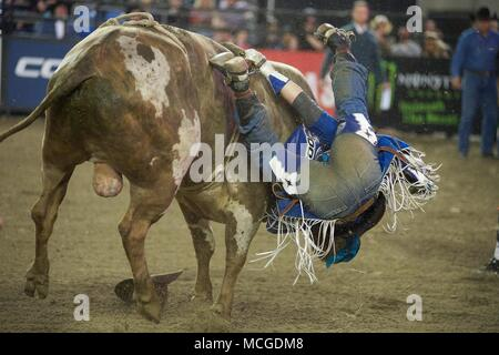 Tacoma, Washington, USA. 15th Apr, 2018. Bull rider CODY NANCE tries to hang on during his ride in the PBR Tacoma Invitational in the Tacoma Dome in Tacoma, Washington. Credit: Jeff Halstead/ZUMA Wire/Alamy Live News - Stock Photo