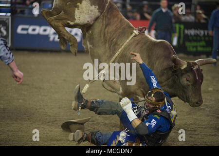Tacoma, Washington, USA. 15th Apr, 2018. Bull rider CODY NANCE gets knocked off his ride in the PBR Tacoma Invitational in the Tacoma Dome in Tacoma, Washington. Credit: Jeff Halstead/ZUMA Wire/Alamy Live News - Stock Photo
