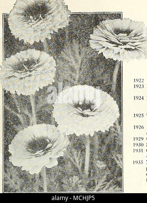 . Chrysanthemums Annual Varieties The single-flowering annual Chrysantliemums or Painted Daisies are showy and eiiective garden favorites, extensively grown for cut flowers. The following hardy annuals are summer-flowering border plants (growing about 2 feet high), bearing in profusion large daisy-like flowers on good stems, and quite distinct from the hardy perennial and autumn flowering varieties. per pkt. 1021 Burridgeanum. Pure white petals with zone of rich brownish red and inner zone of yellow surrounding the dark brown disc $0 10 Eastern Star. Clear yellow petals with dark disc 10 Morni