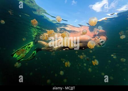 Snorkeler between Spotted jellies (Mastigias papua) in an inland saltwater lake, island Eil Malk, Palau, Micronesia - Stock Photo