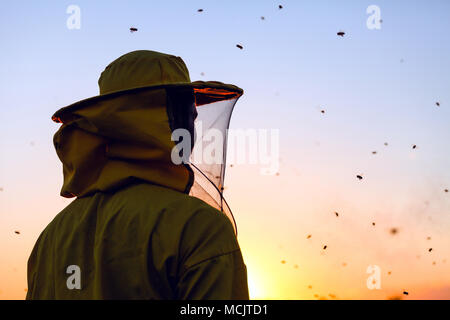 Beekeeper in the sunset surrounded with bees swarming around him - Stock Photo