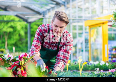 Dedicated florist during work in a modern flower shop - Stock Photo