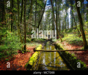 DE - BAVARIA: Springtime in the woods around  Schloss Hohenburg near Lenggries  (HDR Image) - Stock Photo