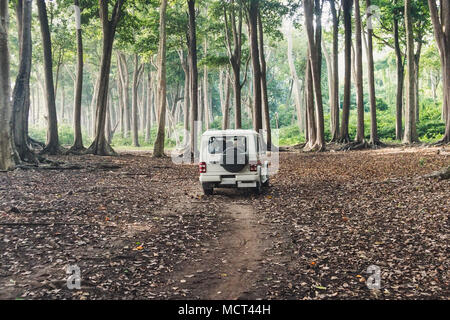 Car SUV on forest road. White car tourist police in the woods of Havelock island, Andaman and Nicobar Islands, India - Stock Photo