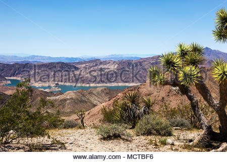 Lake Mead from County Road 25, Mohave County, Arizona, note low water ring along lake, Joshua Tree in foreground - Stock Photo