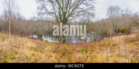 A swamp is an area of land permanently saturated, or filled, with water. Many swamps are even covered by water. Swamps are dominated by trees. - Stock Photo