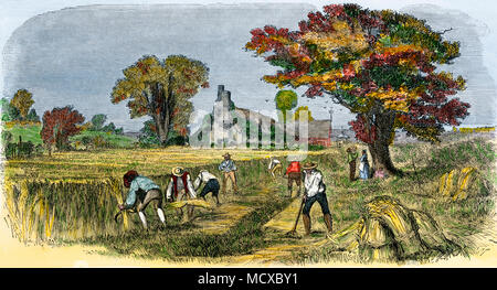 Reaping wheat by hand in the early 1800s near Syracuse NY. Hand-colored woodcut - Stock Photo