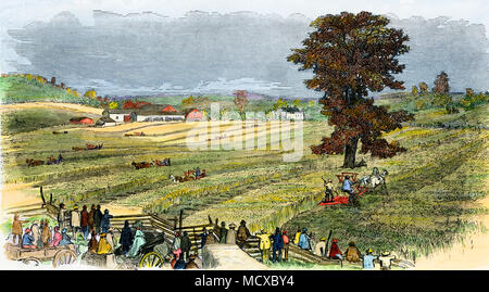 Reaping wheat by machine in the 1850s near Syracuse NY. Hand-colored woodcut - Stock Photo
