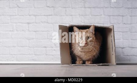 Cute ginger cat sit in a cardboard box and look curious to the camera.