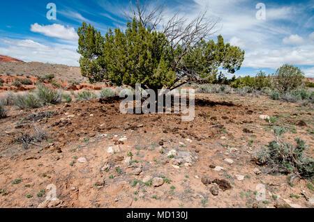 Livestock overuse and damage to rangeland on Bureau of Land Management Land in central Utah - Stock Photo