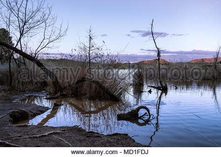 surreal landscape with broken and fallen trees in a lake at magenta dream sunset - Stock Photo
